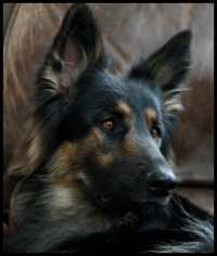 doginleatherchair200x236